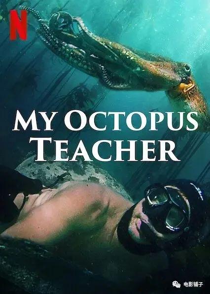 《我的章鱼老师》影评:这豆瓣9.3的新片,让人很难形容-1