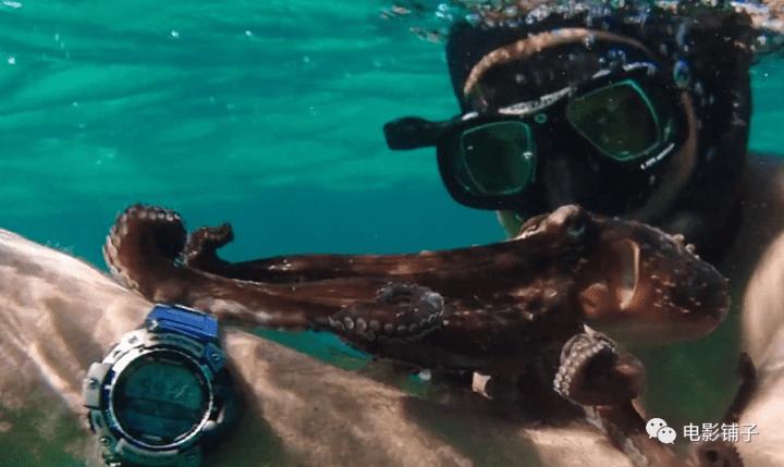 《我的章鱼老师》影评:这豆瓣9.3的新片,让人很难形容-6