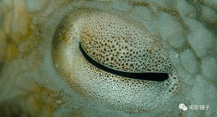 《我的章鱼老师》影评:这豆瓣9.3的新片,让人很难形容-13