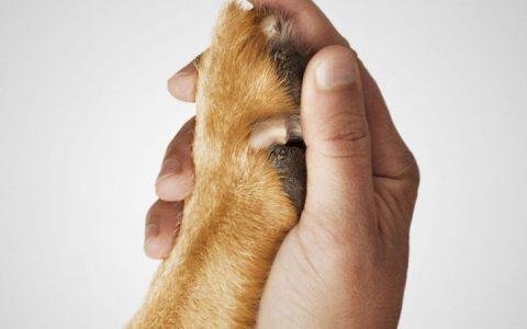 《一条狗的使命》影评:开心、陪伴且活在当下
